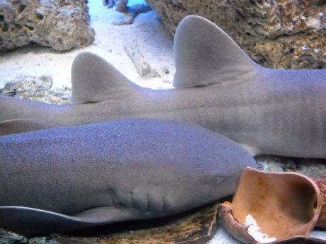 Shark Expo